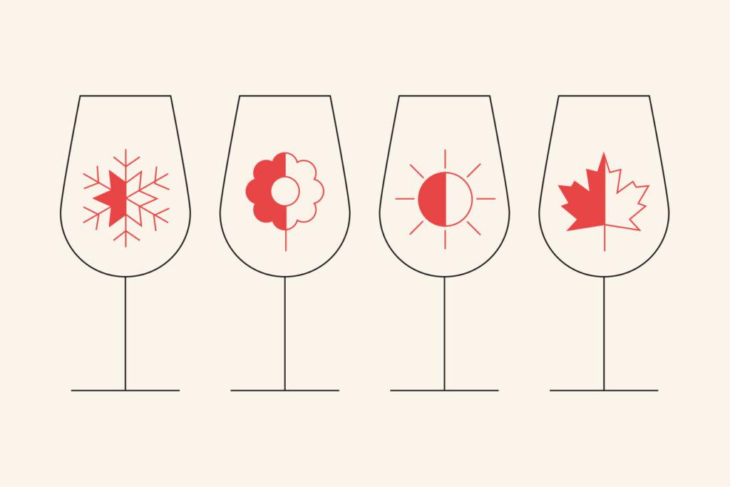 Een jaar in de wijngaard